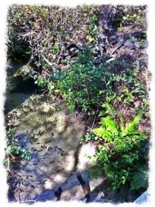 Ferns by the stream at bottom of ravine