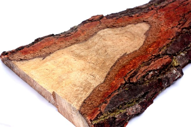 A slice of the cherry tree