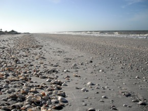 Sanibel Island: Gathering shells for bead embroideredcabochons